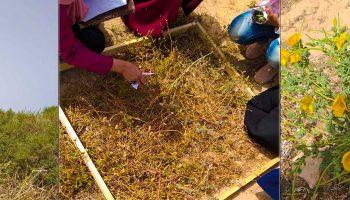 رحلة علمية لطلبة قسم النبات بكلية العلوم صبراتة